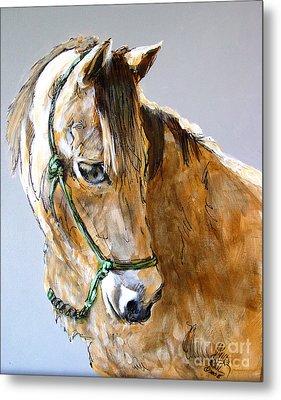 Buck Of The Morgan Horse Ranch Point Reyes National Seashore Metal Print by Paul Miller