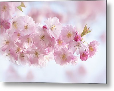 Buds And Blossom Metal Print by Jacky Parker