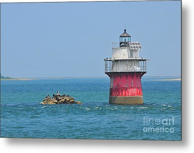 Bug Light Metal Print by Catherine Reusch  Daley