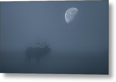 Bugle At The Moon Metal Print by Darren White