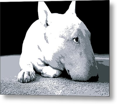 Bull Terrier White On Black Metal Print by Michael Tompsett
