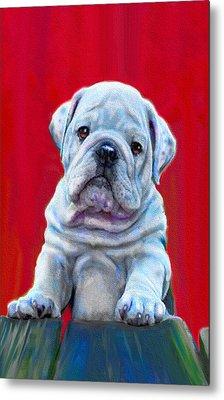 Bulldog Puppy On Red Metal Print by Jane Schnetlage