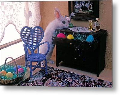 Bunny In Small Room Metal Print by Garry Gay