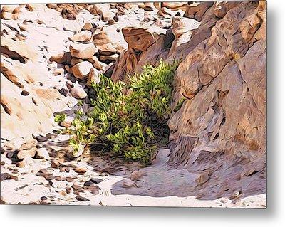 Bush In The Sinai Desert Metal Print by Alexandre Ivanov