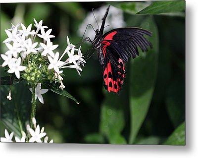 Butterfly IIi Metal Print by David Yunker