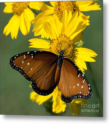 Butterfly Kisses Metal Print by Charles Dobbs