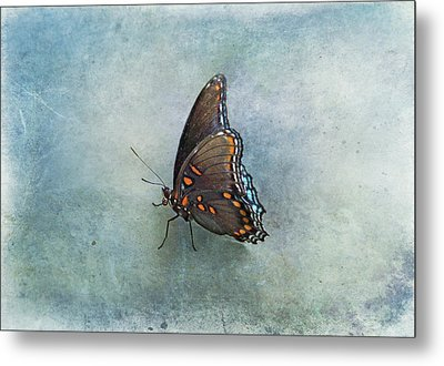 Butterfly On Blue Metal Print by Sandy Keeton