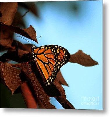 Butterfly On Tree Leaves Metal Print by Lori Tordsen