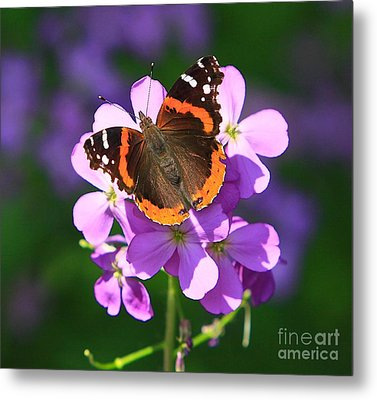 Butterfly Metal Print by Robert Pearson