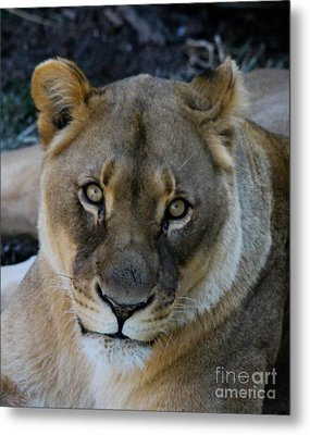 Cabara Metal Print by Laurie Chrisco