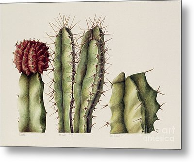 Cacti Metal Print by Annabel Barrett