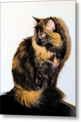 Calico Cats Metal Print by Cheryl Poland