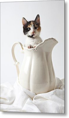 Calico Kitten In White Pitcher Metal Print by Garry Gay