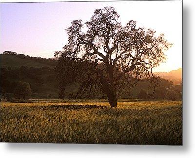 California Hwy 25 Oak Metal Print by Kathy Yates