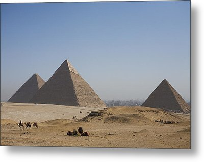 Camels At The Great Pyramids At Giza Metal Print by Taylor S. Kennedy