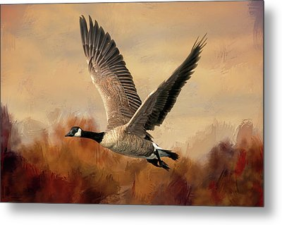 Canadian Air Metal Print by Donna Kennedy