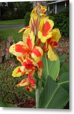 Canna Lily 2 Metal Print by Warren Thompson