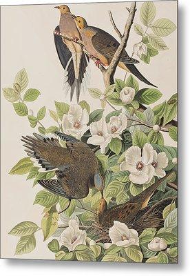 Carolina Turtle Dove Metal Print by John James Audubon