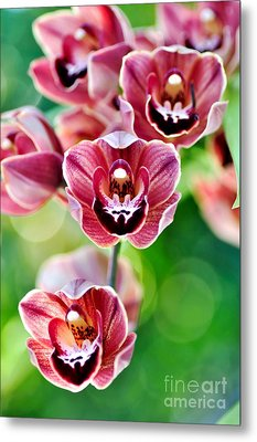 Cascading Miniature Orchids Metal Print by Kaye Menner