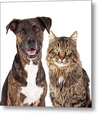 Cat And Dog Closeup Metal Print by Susan Schmitz
