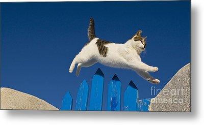 Cat Jumping A Gate Metal Print by Jean-Louis Klein & Marie-Luce Hubert