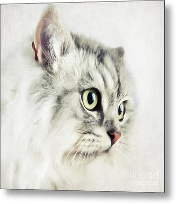 Cat Portrait Metal Print by Angela Doelling AD DESIGN Photo and PhotoArt