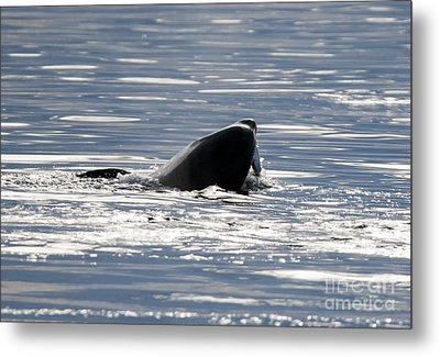 Catching Dinner Metal Print by Mike Dawson