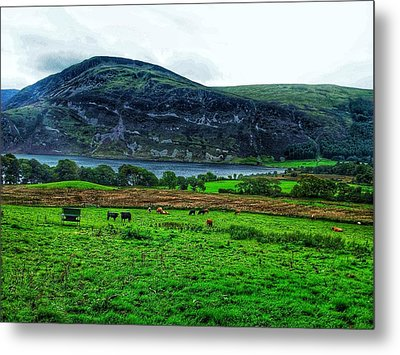 Cattle Grazing At Buttermere Metal Print by Joan-Violet Stretch