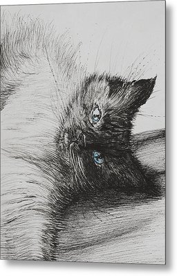 Cheeky Baby Metal Print by Vincent Alexander Booth