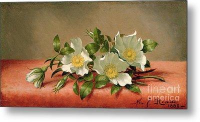 Cherokee Roses Metal Print by Martin Johnson Heade