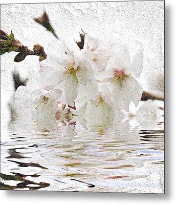 Cherry Blossom In Water Metal Print by Elena Elisseeva