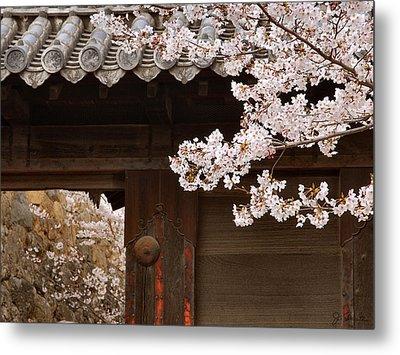 Cherry Blossoms Metal Print by Joe Bonita