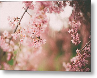 Cherry Blossoms Metal Print by Tracy  Jade