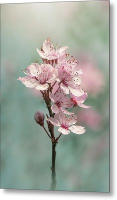 Cherry Clouds Metal Print by Jacky Parker