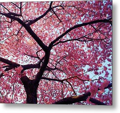 Cherry Tree Metal Print by Mitch Cat