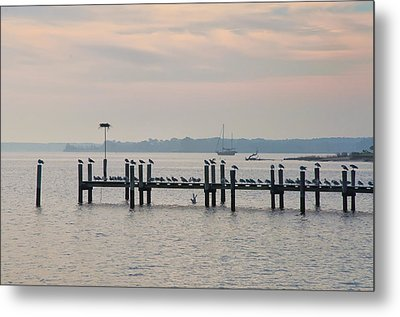 Chesapeake Seagulls Metal Print by Bill Cannon