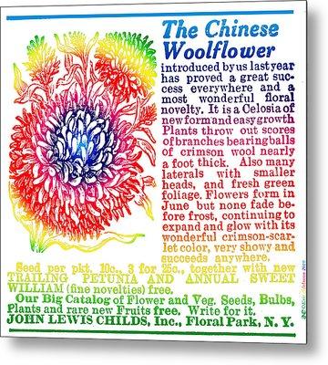 Chinese Woolflower Metal Print by Eric Edelman