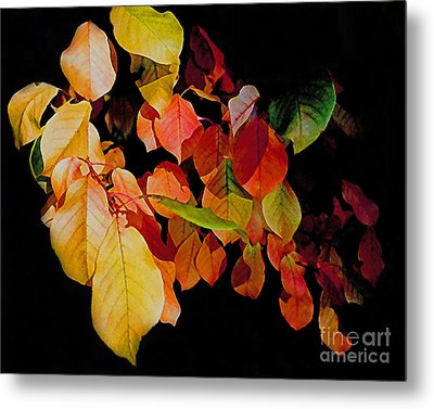Chokecherry Leaves Metal Print by Terril Heilman