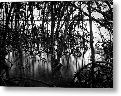 Chokoloskee Mangroves Metal Print by Rich Leighton