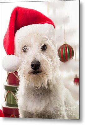 Christmas Elf Dog Metal Print by Edward Fielding