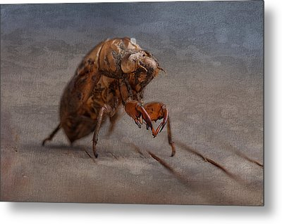Cicada Shell Metal Print by Tom Mc Nemar