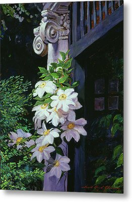 Clematis Blossoms Metal Print by David Lloyd Glover