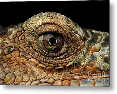 Closeup Eye Of Green Iguana, Looks Like A Dragon Metal Print by Sergey Taran