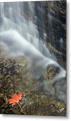 Closeup Maple Leaf And Decew Falls, St Metal Print by Darwin Wiggett