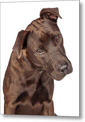 Closeup Of Labrador Crossbreed Dog Tilting Head Metal Print by Susan Schmitz