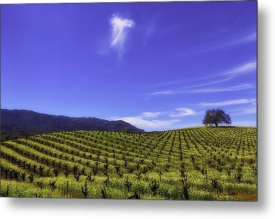 Cloud Above The Vineyards Metal Print by Garry Gay
