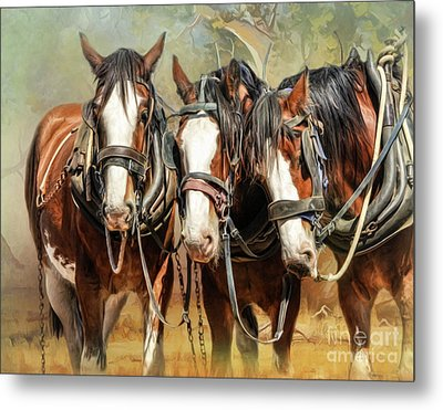 Clydesdale Conversation Metal Print by Trudi Simmonds