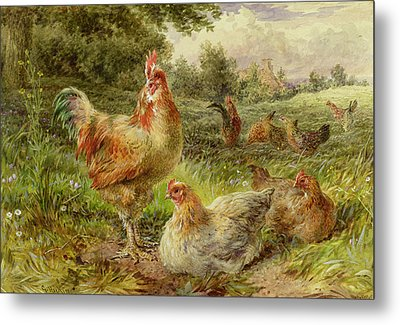 Cochin China Fowls Metal Print by George Hickin