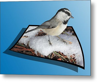 Cold Feet Metal Print by Shane Bechler