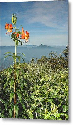 Cold Mtn. And Turk's Cap Lily Metal Print by Alan Lenk